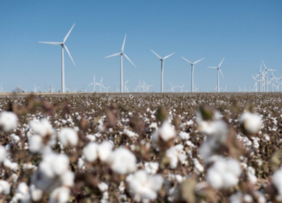 Renewable Energy Races Ahead as Nuclear and Fossil Fuels Falter