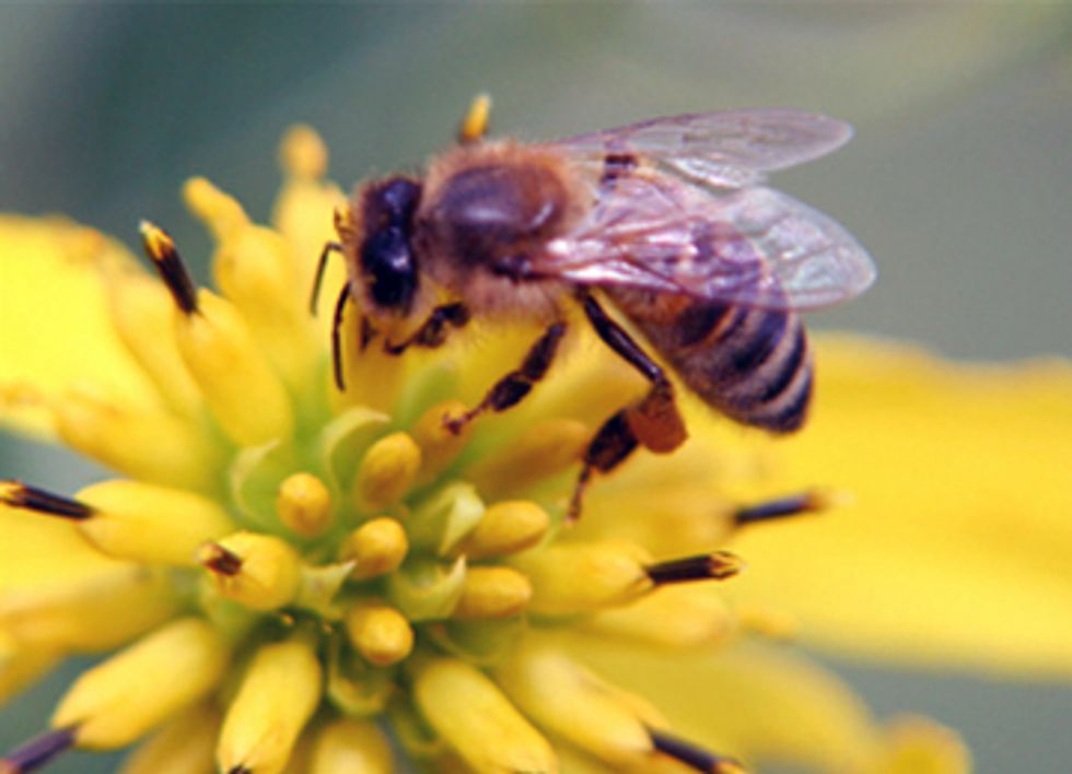 New Studies Confirm Pesticide Exposure Major Contributor to Declining Honey Bee Populations