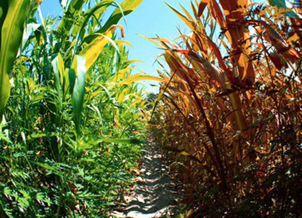 Farmers Warn Climate Change Threatens Global Food Supply