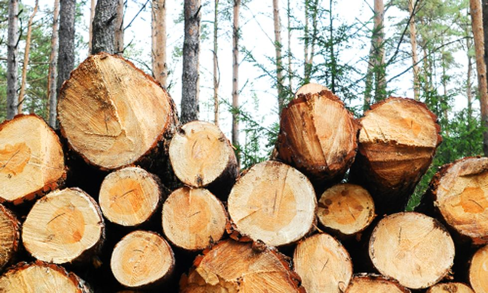 4 Ways Companies Can Ensure Wood Comes From Legal Logging