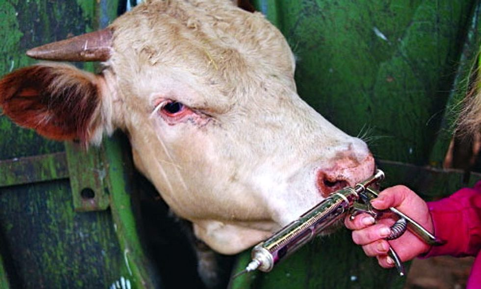 FDA Voluntary Approach to Curb Antibiotic Overuse on Factory Farms is 'Just Window Dressing'