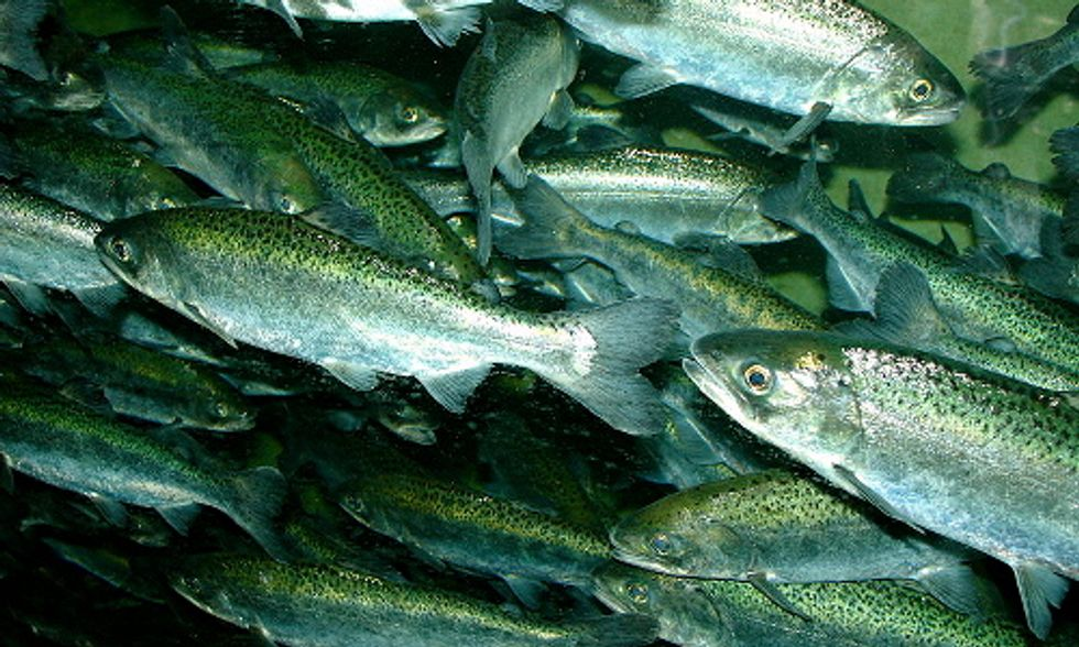 Need-to-Know Facts About Farmed Fish