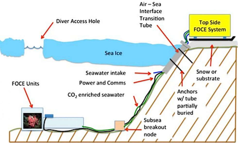 Scientists to Build Underwater Bio-Dome Simulating Future Ocean Acidification Levels
