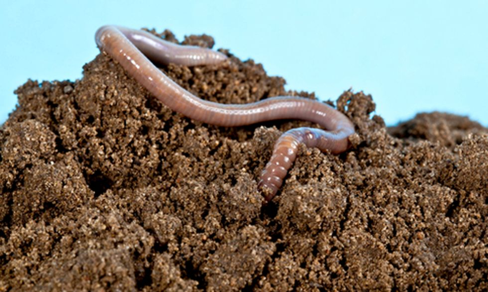 Earthworms Detoxify Pesticides From Soil at Significant Cost