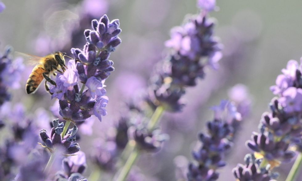 15 Plants to Help Save Bees