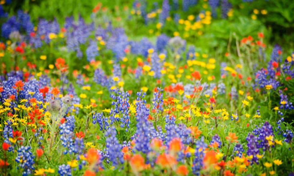 9 Tips for Wildflower Hunting