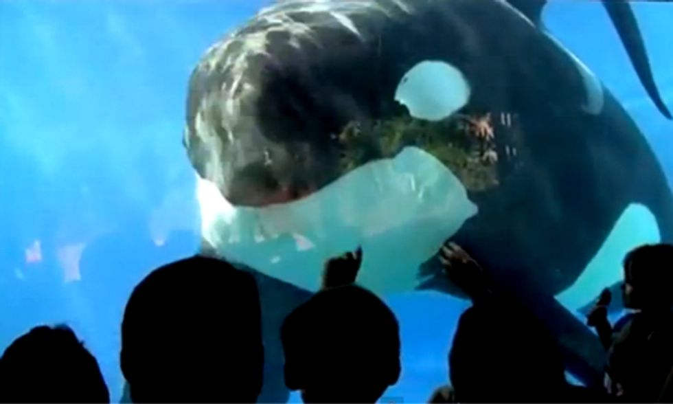 Shocking Court Documents Expose SeaWorld's Continued Cruelty of Orca Whales