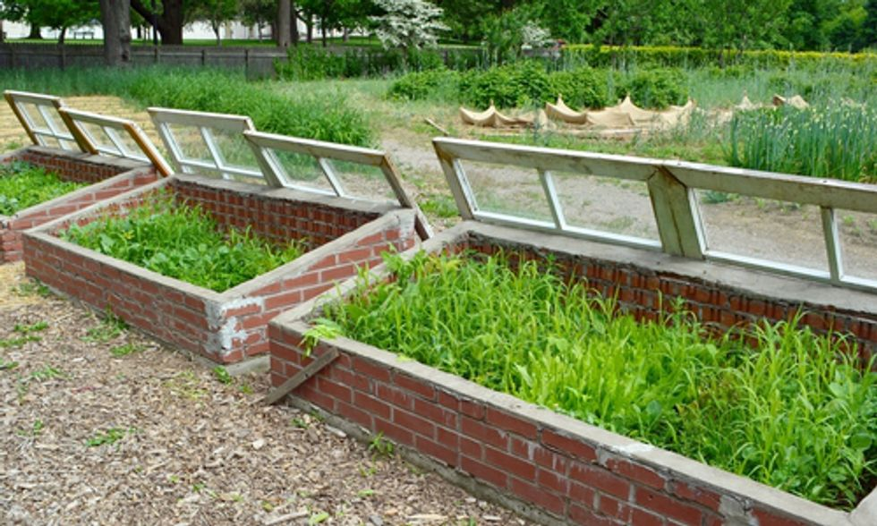 How to Use Cold Frames As a Year-Round Gardening Tool