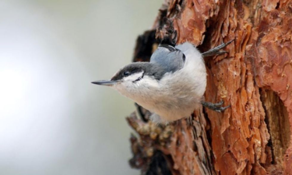 USGS Climate Change Study Predicts Bleak Future for Birds and Reptiles in Southwest