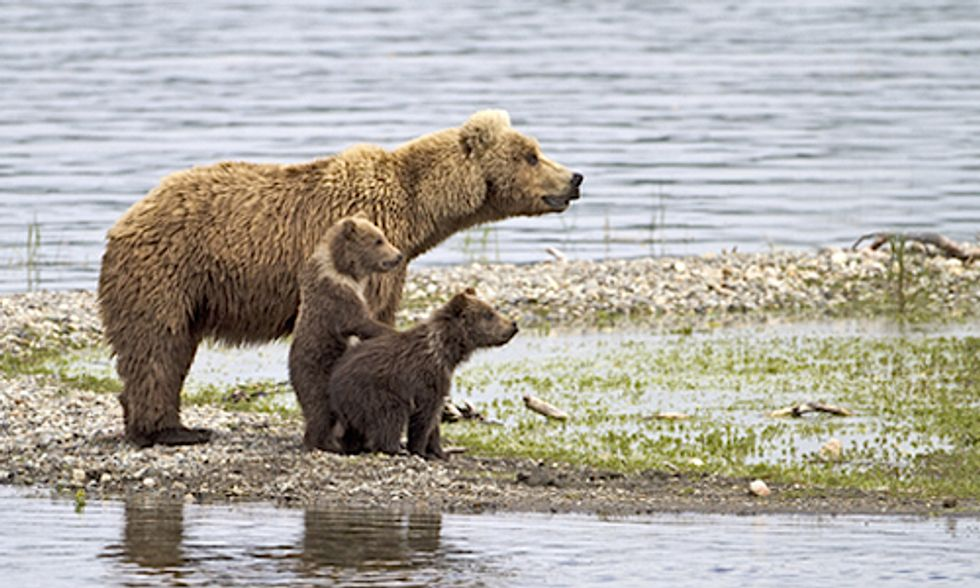 British Columbia Expands Controversial Grizzly Bear Trophy Hunt