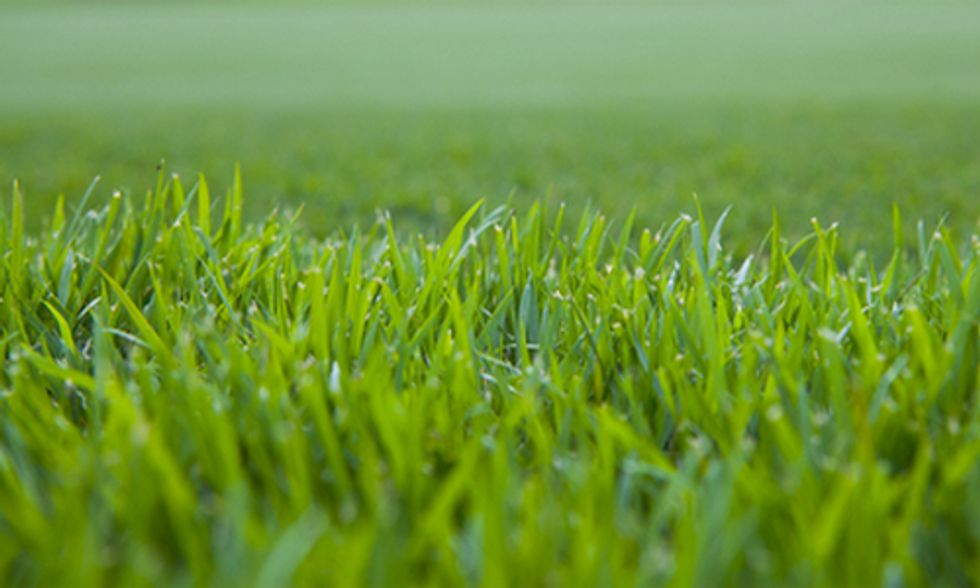 Connecticut Senate Preemptively Bans GE Grass Seed