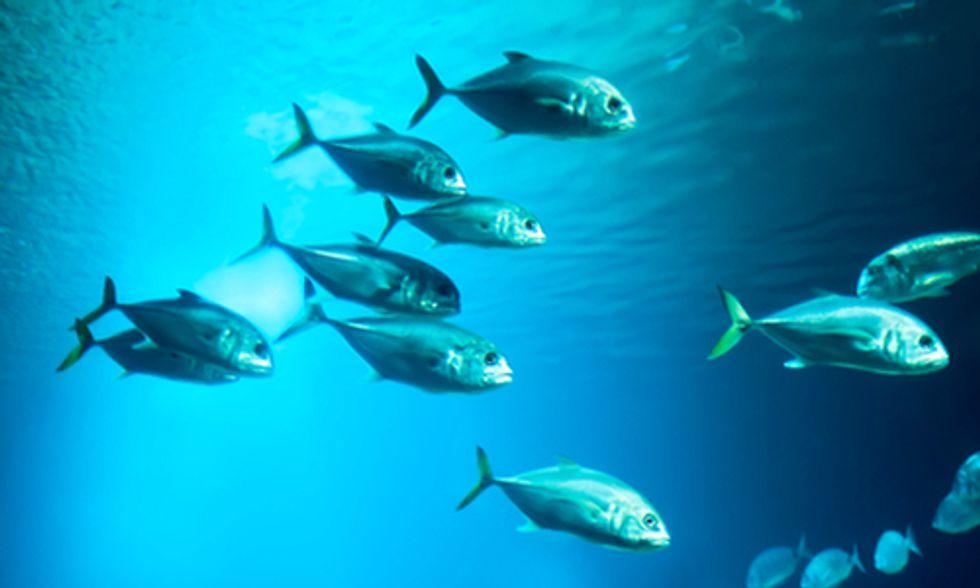 Ocean Acidification Impairs Sense of Smell in Fish