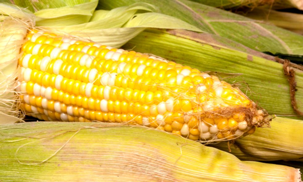 French Parliament Bans GMO Corn