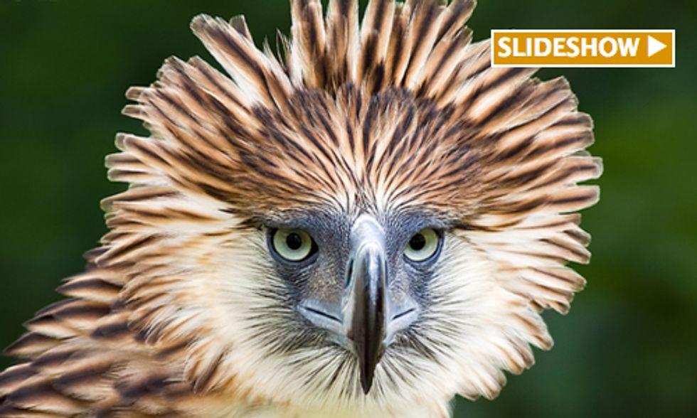 100 Rarest Birds in the World