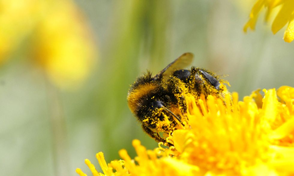 New Report Reveals Two-Thirds of European Honeybee Pollen Contaminated By Dozens of Pesticides