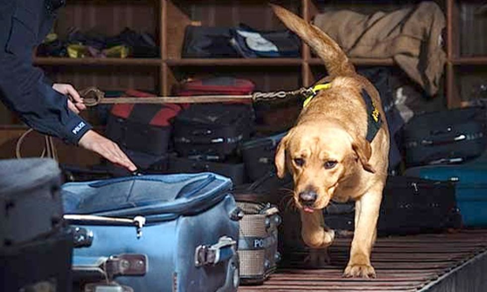 Labradors Trained to Detect Illegally Trafficked Wildlife Products