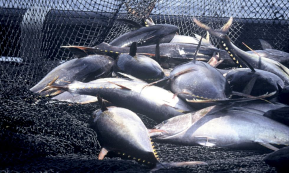 Unsustainable Seafood: A New  Crackdown on Illegal Fishing