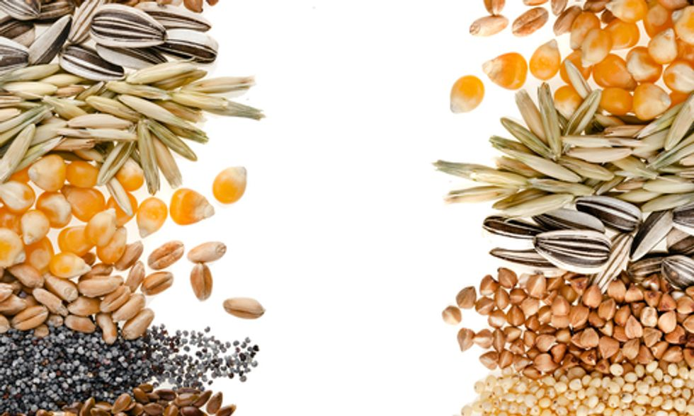 Canada Focuses on Food Security With Seed Diversity Initiative