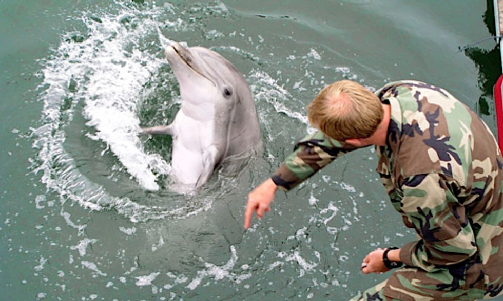 U.S. Military-Trained Dolphins Forced to Fight Human Wars