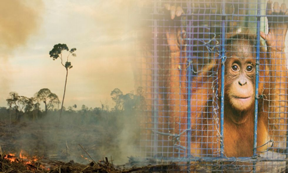 Why is Palm Oil So Bad?