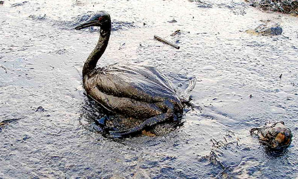 Kinder Morgan Claims Oil Spills Can Have 'Positive' Effects