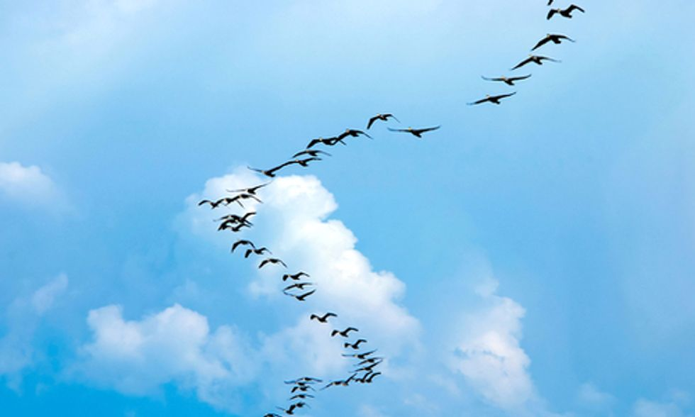 Bird Migration Season: A Journey Fraught With Peril