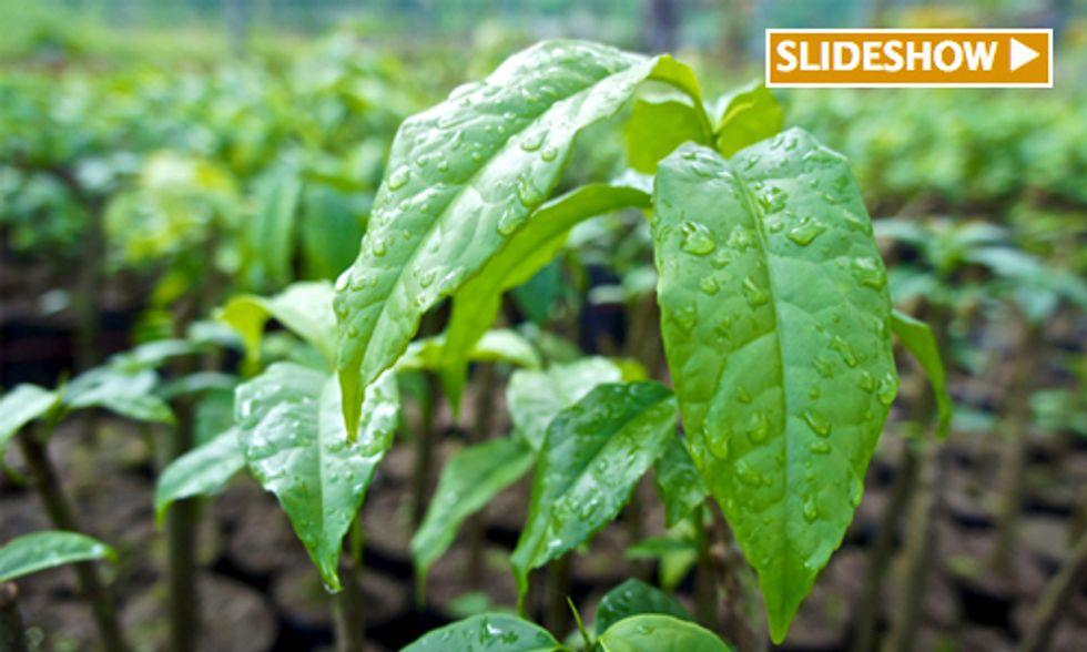 Social Enterprise 'Fully Alive' in Ecuador