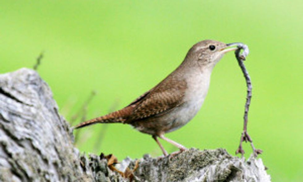 How to Provide Nesting Material to Birds in Your Garden