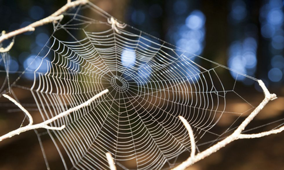 The Role of Spiders in Your Garden
