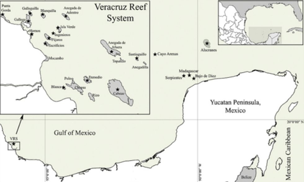 Organizations Defend Veracruz Reef System Against Proposed Port Expansion