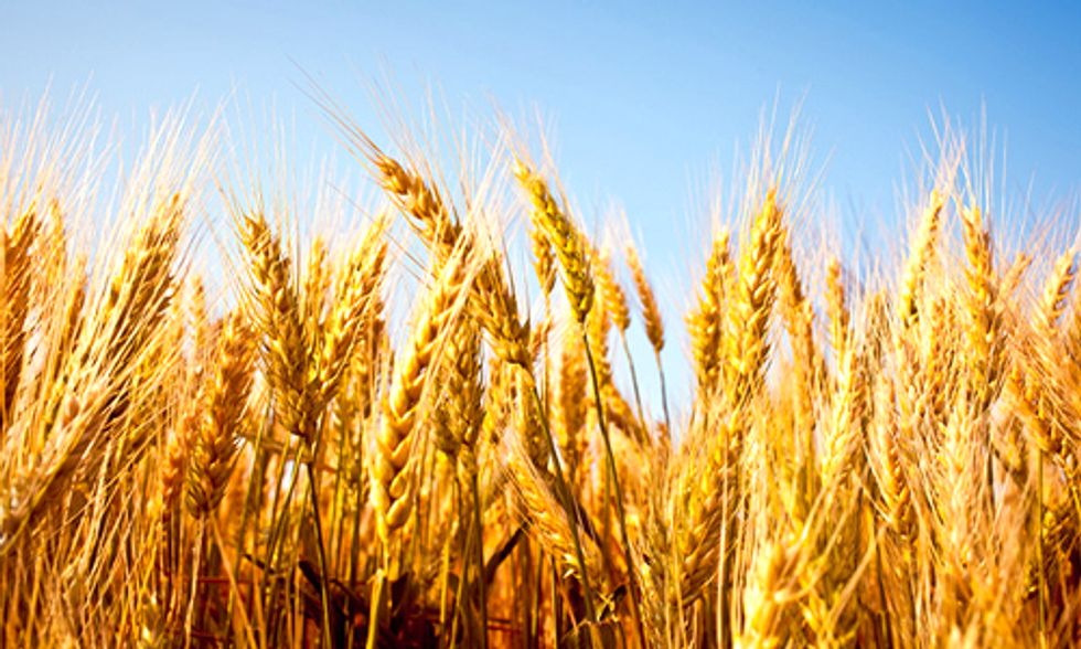 Rising CO2 Levels Will Make Staple Crops Less Nutritious
