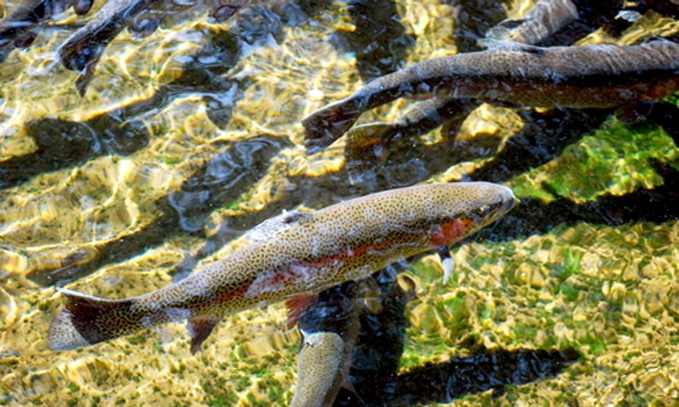 10 Fun Facts About Migratory Fish