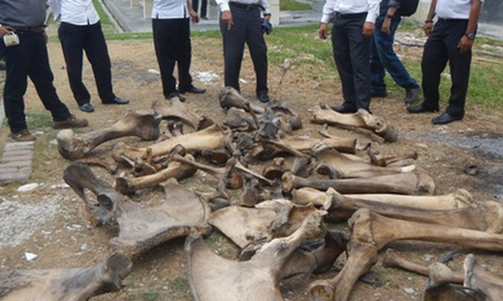 Ivory Traders Arrested in Indonesia