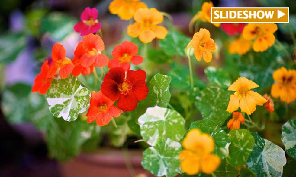 11 Edible Flowers to Grow in Your Garden