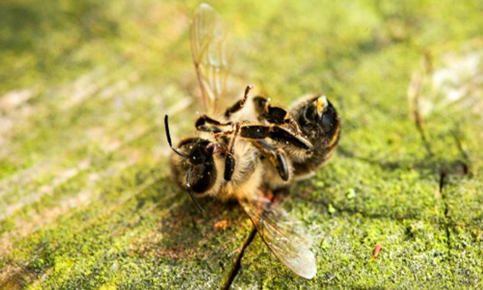 Two New Studies Address the Ongoing Plight of Honeybees