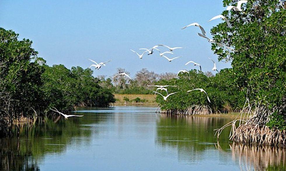 Florida Officials Halt Unauthorized 'Fracking-Like' Drilling Near the Everglades