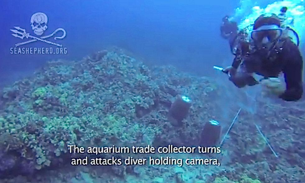 Sea Shepherd Diver Viciously Attacked by Wildlife Trafficker While Documenting Aquarium Trade in Hawaii