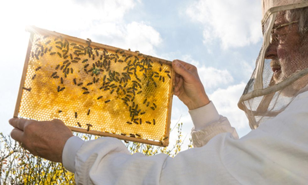 USDA Reports Honeybee Death Rate Too High for Long-Term Survival
