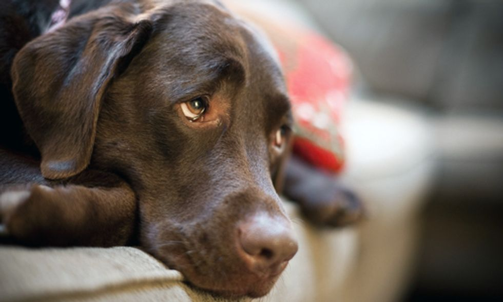 More Dogs Sick From Imported Pet Treats From China