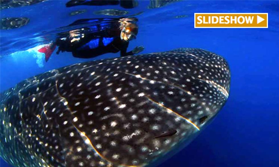 Mission Blue: Sylvia Earle's Plan to Save the Ocean