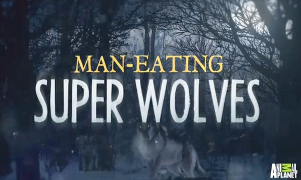 'Man-Eating Super Wolves' Episode Prompts Public Outcry Against Animal Planet