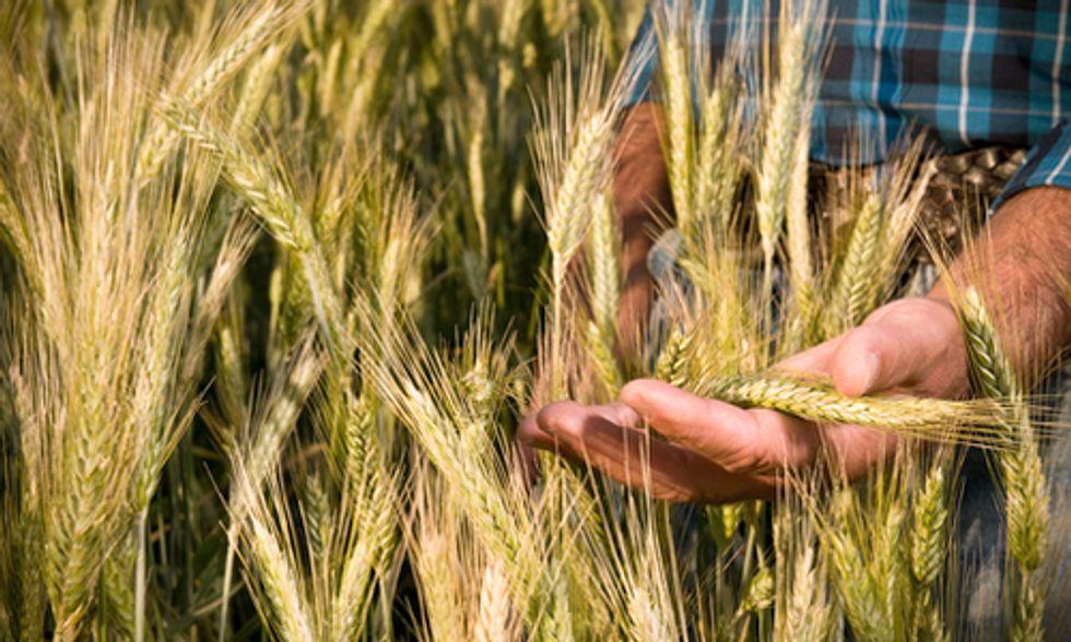 Australian Supreme Court Rules Against Organic Farmer in GE Contamination Suit
