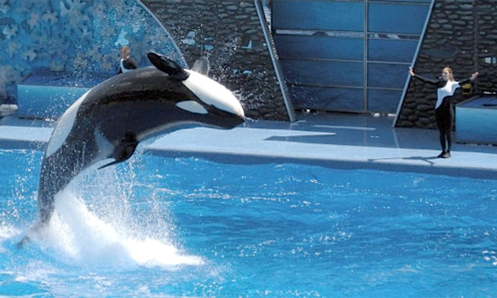 The Blackfish Effect: 40 Members of Congress Call on USDA to Revise Rules for Captive Marine Mammals