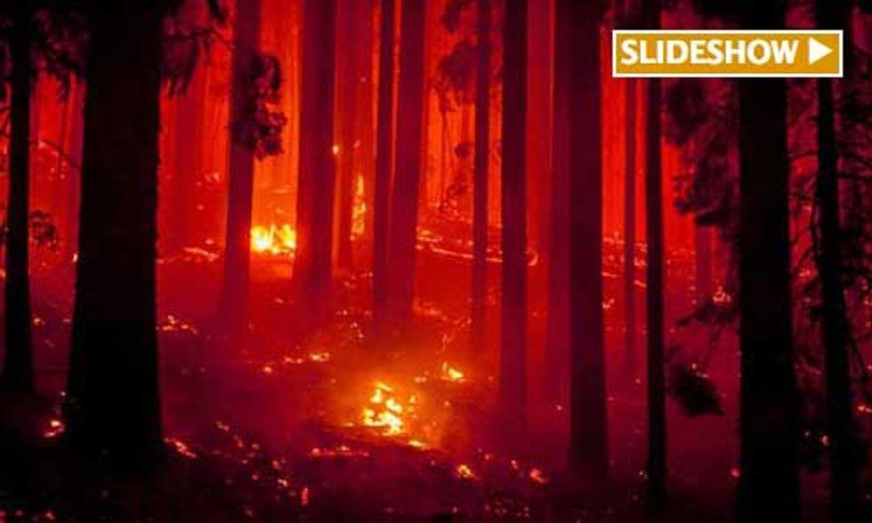 Salvage Logging Near Yosemite?