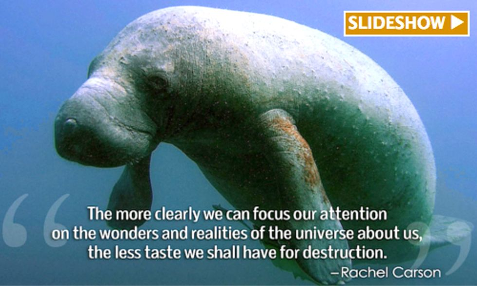 9 Quotes About Animals in Captivity That Could Change The Way You Think About Zoos