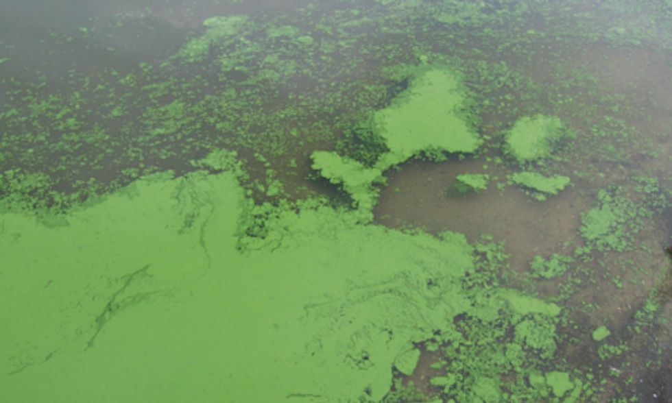 The Global Fresh Water Crisis: Algae Blooms, Privatization and Scarcity