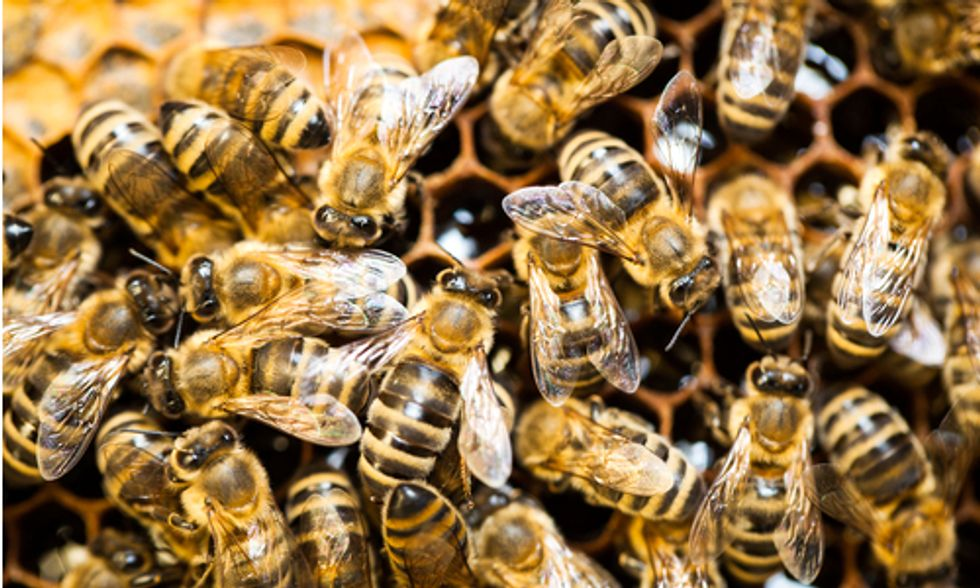 Obama Mandates Precedent-Setting Task Force to Protect Honey Bees and Other Pollinators