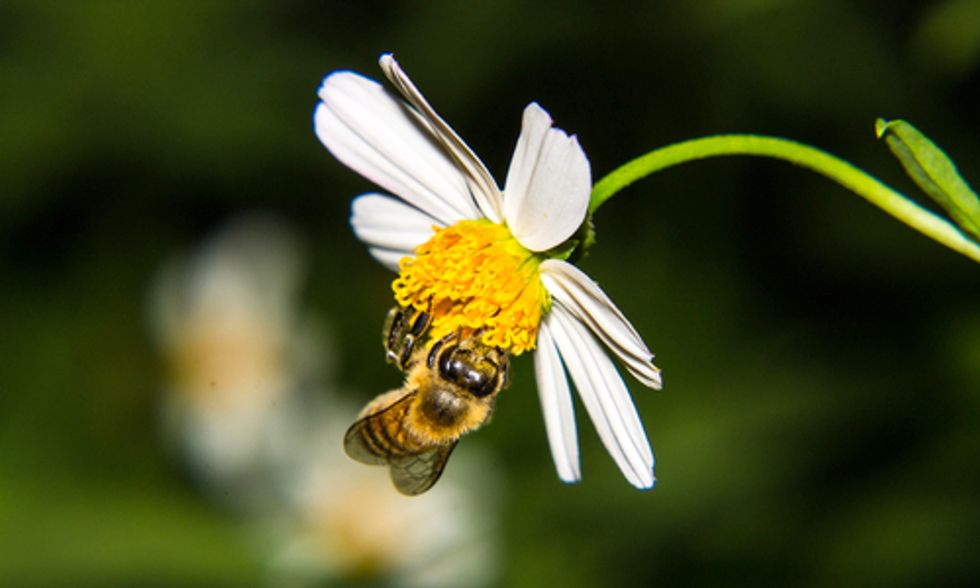 Scientists Release Landmark Worldwide Assessment Detailing Effects of Bee-Killing Pesticides