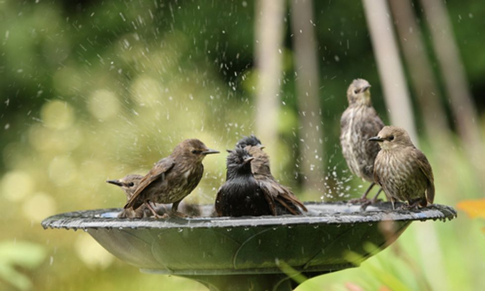 10 Ways to Help Birds This Summer