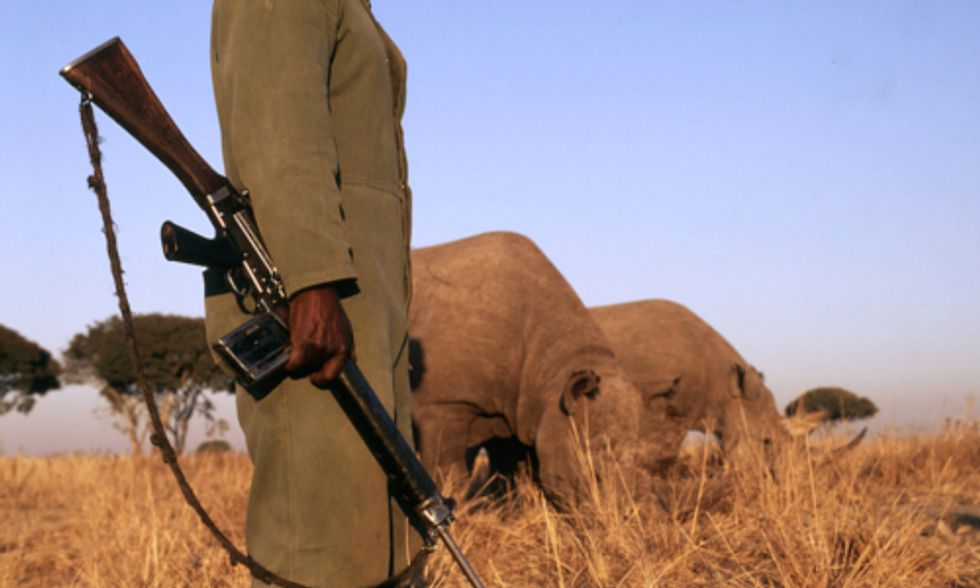 How Improving Local Economy Could Solve Africa's Wildlife Poaching Problem